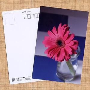 花のポストカード ガーベラ(ピンク)|horiya-studio