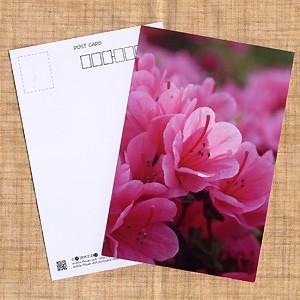 花のポストカード ツツジ(ピンク)|horiya-studio