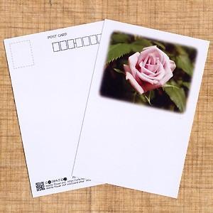 花のポストカード バラ(ピンク、余白あり)|horiya-studio