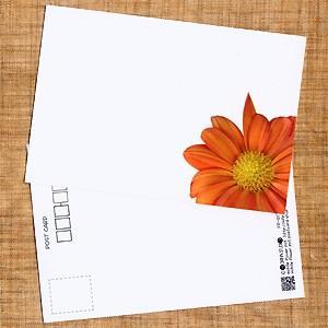 花のポストカード スプレーギク(オレンジ、インクジェット紙)|horiya-studio