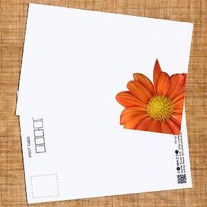 花のポストカード スプレーギク(オレンジ、インクジェット紙)B|horiya-studio