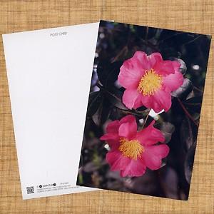 花のポストカード サザンカ(ピンク)2|horiya-studio