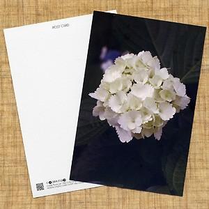 花のポストカード アジサイ(白)|horiya-studio
