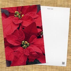 花のポストカード ポインセチア|horiya-studio