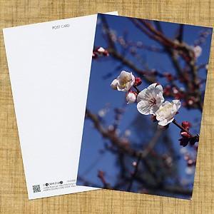 花のポストカード ウメ|horiya-studio