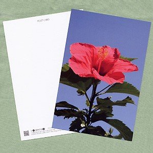 花のポストカード ハイビスカス(赤)|horiya-studio