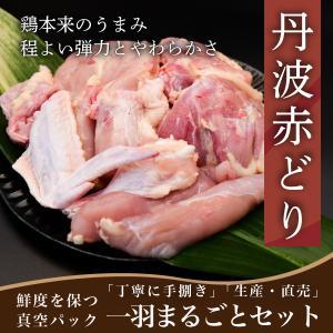 鶏肉 丹波ブランド鶏 赤どり 赤鶏 一羽セット 手捌き 新鮮 真空包装 贈答 ギフト