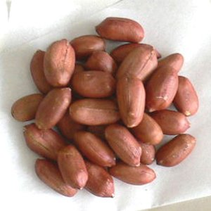 塩南京(半立種) 【落花生】【ピーナッツ】|houkanka84