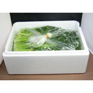 お漬物!水かけ菜のお漬物 (5kgパック)|houshin