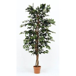 不二貿易 観葉植物 フィカス 1124 A グリーン 52662 19840|hows-yho