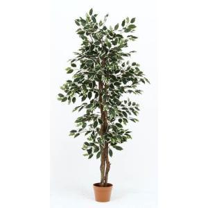 不二貿易 観葉植物 フィカス 690 B グリーン 52663 19843