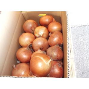 「庄田津名バイパス店」兵庫県淡路島産 たまねぎLサイズ(10kg)|hyogo-tokusanhin