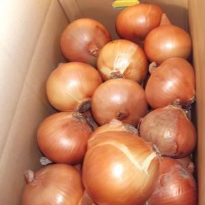 「庄田津名バイパス店」兵庫県淡路島産新たまねぎLサイズ(5kg)|hyogo-tokusanhin