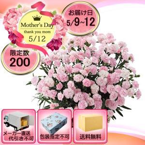 メーカー直送 母の日 ピンクカーネーション鉢植え「バンビーノ」6号|i-chie