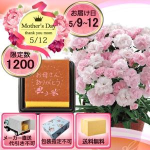 メーカー直送 母の日 ピンクカーネーション鉢植え「バンビーノ」4号と文明堂カステラのセット|i-chie