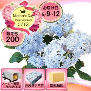 メーカー直送 母の日 生産地 島根限定 アジサイ鉢植え 万華鏡|i-chie