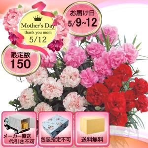メーカー直送 母の日 カーネーション 3色鉢植え6号鉢|i-chie