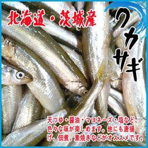 ワカサギ 北海道・茨城産 500g 若鷺 公魚 わかさぎ★築地 i-ichiba