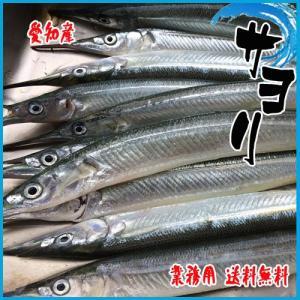 【送料無料】【業務用】茨城県産 サヨリ 約3kg(30-40尾前後入り) 細魚 針魚 さより|i-ichiba