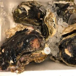 【稀少な大粒サイズ】天然 大粒 岩牡蠣 1粒 静岡・山口県産 かき カキ 岩ガキ|i-ichiba