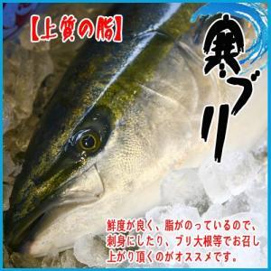 【上質の脂】佐渡 寒ブリ 約7-8kg 美味しい果物付|i-ichiba