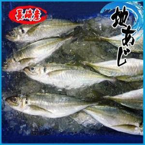 業務用 送料無料 地アジ 長崎 5kg約28尾前後|i-ichiba