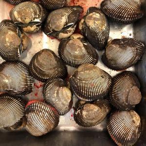活赤貝 殻付き 1kg (約5-8個) アカガイ|i-ichiba