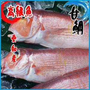 甘鯛    1尾 約 1kg  愛知産      ★高級魚|i-ichiba