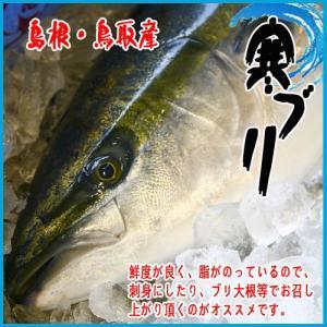 島根・鳥取産 寒ブリ 6kg〜7kg このサイズ!!! ぶり|i-ichiba