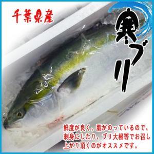 千葉県産 ブリ 1尾 約8-9kg 【業務用】 i-ichiba