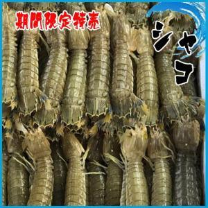 期間限定特売 シャコ  1kg(約15〜20匹入り)|i-ichiba