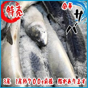 金華  サバ  3尾  1尾約700g前後 脂があります!|i-ichiba