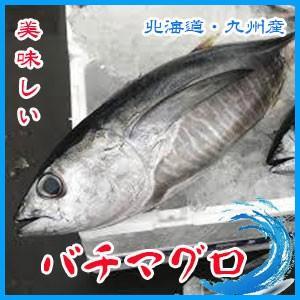 業務用   生バチマグロ  約9.5〜10.5kg前後 3枚卸    北海道・九州産 |i-ichiba