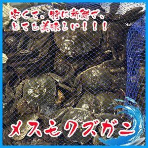 日本の川蟹 メス  モクズガニ 3kg   北海道産 ★予約必要 i-ichiba