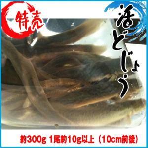活どじょう 約300g 1尾約10g以上(10cm前後) ドジョウ|i-ichiba