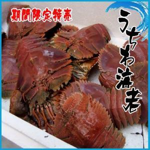 期間限定特売 うちわ海老 2匹 約300〜400g  海老 えび|i-ichiba