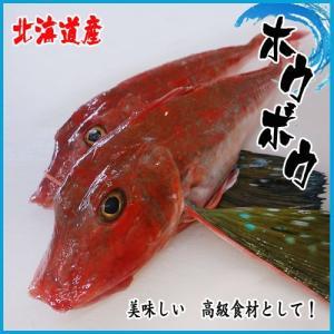 方々 魚 ホウボウ  1kg 北海道  ★築地|i-ichiba