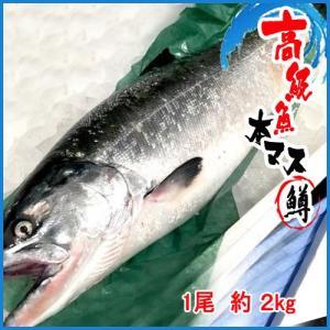本マス 鱒 1尾 約 2kg    本ます|i-ichiba