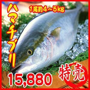 業務用 送料無料 ハマチ ブリ(養殖) 1尾約4〜5kg|i-ichiba