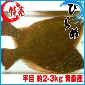 【業務用】沖ひらめ 約2-3kg 青森産 ヒラメ 平目 沖ヒラメ|i-ichiba