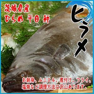 【業務用】活〆 ヒラメ 一尾1kg以上 茨城県産 ヒラメ ひらめ 平目 鮃|i-ichiba