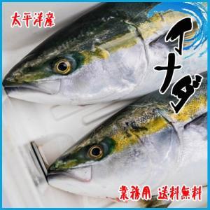 業務用 送料無料 イナダ 太平洋 5kg約3-5尾前後 i-ichiba