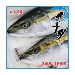 イナダ 1尾約2kg 福井・太平洋産|i-ichiba