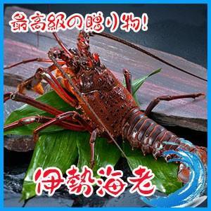 【高級素材】伊勢海老 1kg (約2-4匹) 伊勢エビ えび|i-ichiba