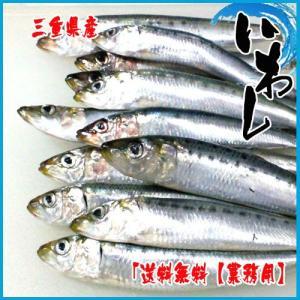 送料無料【業務用】いわし 5kg前後 太平洋産 鰯 イワシ マイワシ イワシ i-ichiba