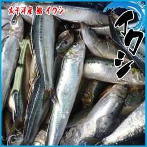真いわし 1kg(約5-8尾前後入り) 太平洋産 鰯 イワシ