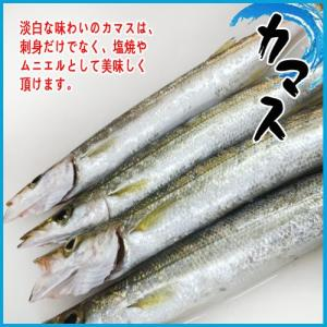 【業務用】三重県産 カマス約3kg以上(17尾前後) かます i-ichiba