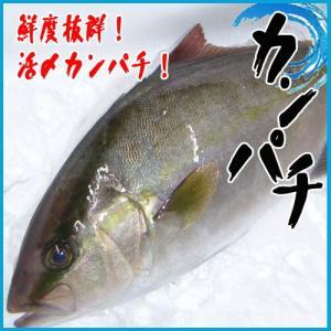 【業務用】活〆カンパチ 1尾 2kg前後 かんぱち|i-ichiba