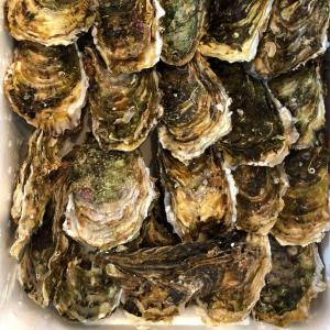 業務用   カキ 殻付かき 25粒 兵庫・三陸産 牡蠣|i-ichiba