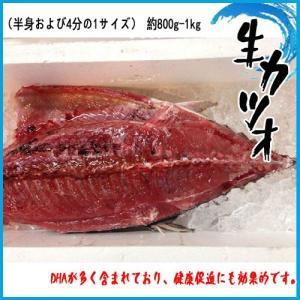 生カツオ(半身および4分の1サイズ) 約800g-1kg かつお 鰹|i-ichiba